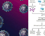 Scientists use crispr cas9 to successfully modify t cells to help fight diseases