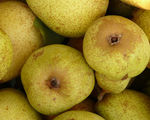 Consume some pears before drinking and you will likely avoid a hangover says new study