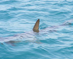 Hats off to ups for banning all future trade of shark fins per its consultation with the wwf