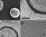 Scientists waking up massive ancient virus from siberia's frozen wasteland to study it