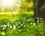 Seasons seem to be shifting researchers project spring to come 3 weeks earlier than usual