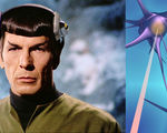Researchers reattach severed neurons lasers remember spock's brain