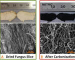 Mushroom and nanoparticle combo outperform components within standard lithium ion batteries
