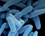 Synthetic biotics reprogrammed gut bacteria fight disease genetic disorders
