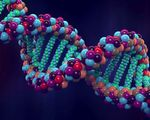 Genome project%e2%80%93write scientists create synthetic human genomes
