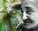 Thc remove plaque forming alzheimer's proteins reduce inflammation protect nerve cells
