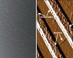 Genetically engineered bacteria fabricate bio nanowires future biodevices