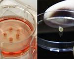 Mini brain organoids human stem cells researchers develop treatments brain diseases