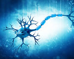Multiple sclerosis breakthrough progression stopped replacing diseased immune system