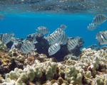 World's largest marine sanctuary hawaii papah%c4%81naumoku%c4%81kea marine national monument