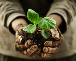Farmer holding plants in hands dirty hands shutterstock 143191069