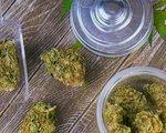 Medical cannabis buds shutterstock 1015248151 1068x601