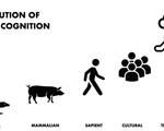Evolution of moral cognition