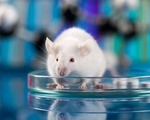 Early mouse fetuses generated without sperm or eggs for first time