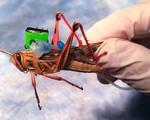 Cyborg grasshopper freethink webthumb 2400x1000